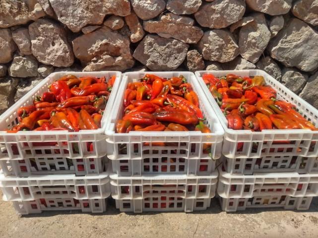 We have joined the Majorca Produces – Urgent Aid (Mallorca Produce - Ayuda Urgente) Initiative